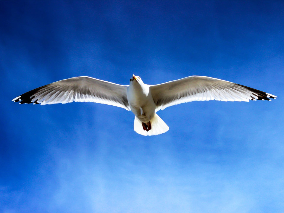 鳥になれ。