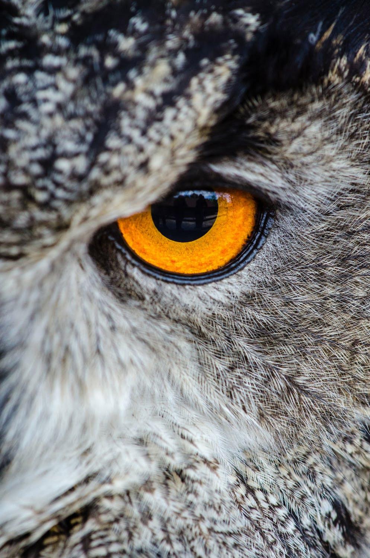 鳥の眼をもとう